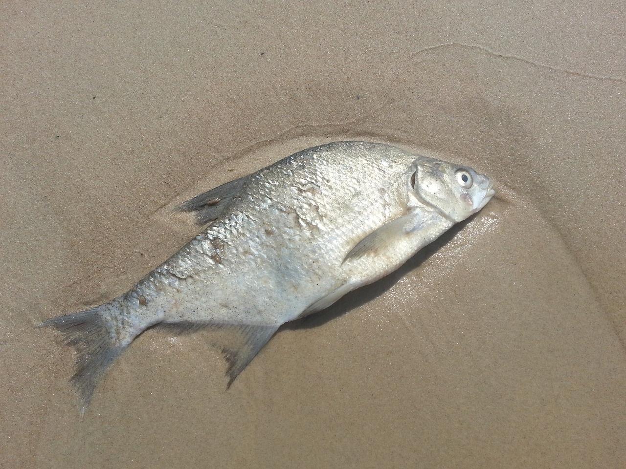 dead-fish_luke-francis-writer